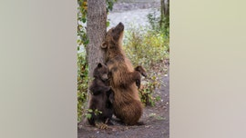 Adorable pictures show bear teaching its young how to scratch its back