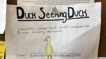 Maine man helps lonely duck with surprising dating ad