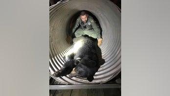 Black bear removed from University of Tennessee's baseball stadium