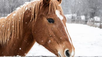 6 more horses found shot to death in eastern Kentucky, 'looked like battlefield'