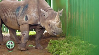 Fausta, 'world's oldest rhino,' dead at 57, conservation says