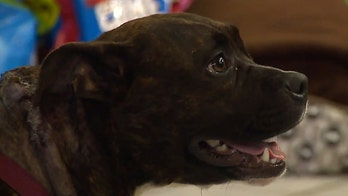 Indiana family dog stabbed on Christmas morning as suspected burglar tries to break into home