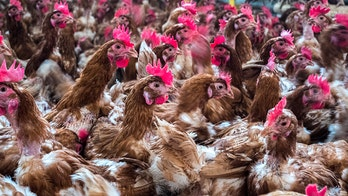 Russia reports first case of avian flu in humans