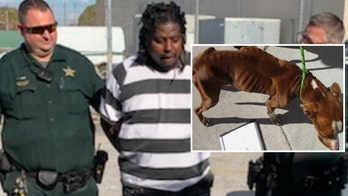 Florida sheriff escorts man to jail after 'extremely emaciated' dog found: 'This is how we treat you'