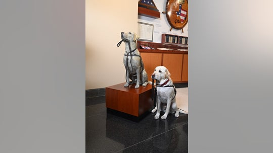 Statue of Sully, service dog for George H.W. Bush, unveiled at president's Texas library