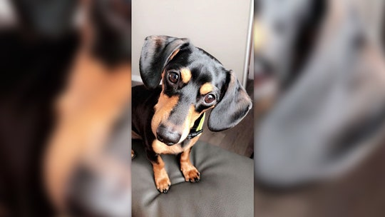 Utah woman claims vet mistakenly euthanized pet dog after calling wrong family