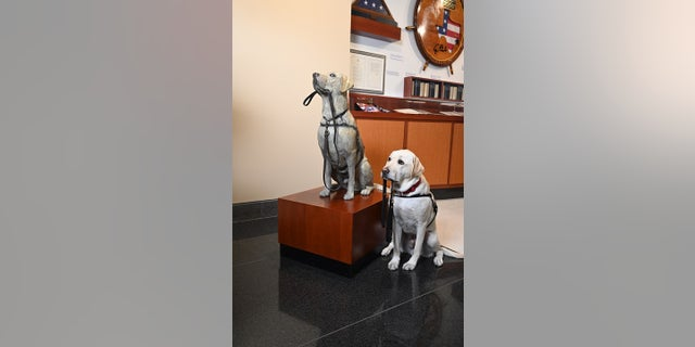 Sully, the yellow labrador who assisted the late former President George H.W. Bush before his death last year, sits next to a statue of himself at theGeorge H.W. Bush Presidential Library and Museum at Texas A&M University.