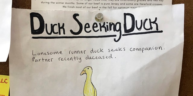 An advertisement for a single duck seeking a partner is seen on a bulletin board at the Blue Hill Co-op, Thursday in Blue Hill, Maine. The duck's owner, Chris Morris, is using the dating ad to try to find a match for one of his ducks who lost its mate to a hungry bobcat a couple of weeks ago at Morris' yard in Blue Hill. (Jennifer Coolidge via AP)