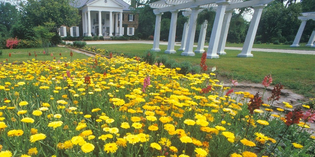 Home and gardens of the Boone Hall Plantation, Charleston, SC (Photo by: Joe Sohm/Visions of America/Universal Images Group via Getty Images)