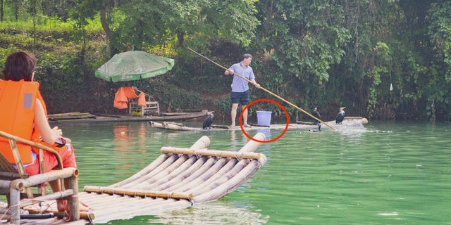 A tourist watches trained cormorants prepare to 'fish' along the Li River in southern China. Note the bucket already full of fish by the trainer.