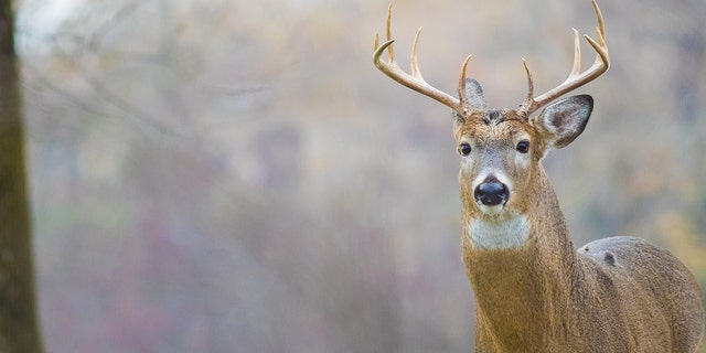 """""""As Pennsylvania's state wildlife agency, we have said from the beginning that the actions shown in the video are reprehensible,"""" the state's Game Commission said shortly after the footage surfaced last year."""