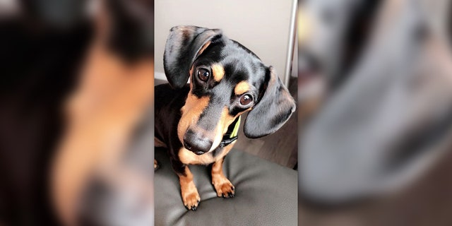 Westlake Legal Group Dog-Euthanized-Facebook-1 Utah woman claims vet mistakenly euthanized pet dog after calling wrong family fox-news/us/us-regions/west/utah fox-news/odd-news fox-news/lifestyle/pets fox news fnc/lifestyle fnc article Alexandra Deabler 3ca9aa46-cb65-52cc-b887-5593d6efee85
