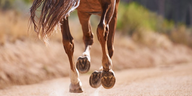 Authorities in Florida discovered the slaughtered remains of a horse in a field on Monday.