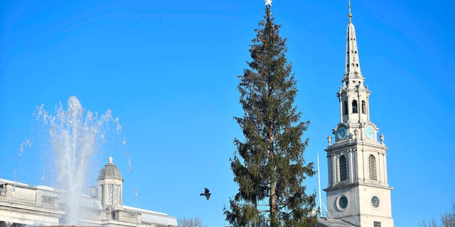 Once the tree arrived in London's Trafalgar Square, some commented it looked rather thin compared to prior years.