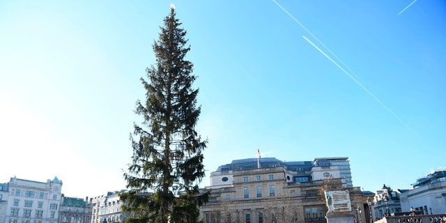 A view of the Christmas tree, an annual gift from the city of Oslo as a token of Norwegian gratitude to the people of London for their assistance, during the second world war, in Trafalgar Square, London, Wednesday, Dec. 4, 2019.