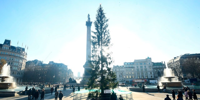 The Trafalgar Square Christmas tree is a nearly 70-foot Norwegian Spruce that's been an annual from the city of Oslo since 1947 as a token of Norwegian gratitude to the people of London for their assistance during World War Two.