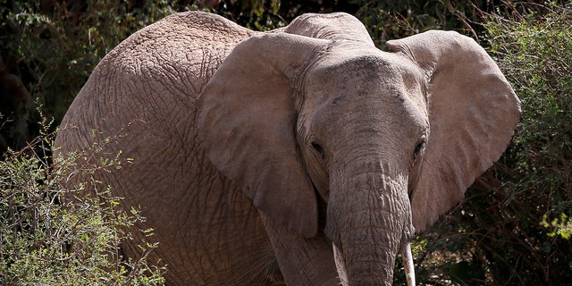 Botswana is known for having the largest elephant population in the world.