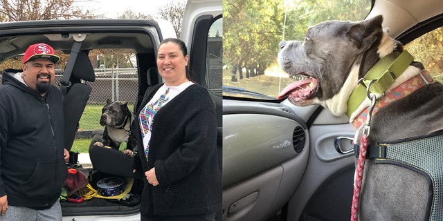 Seamus, a 9-year-old pit bull-bully mix, was adopted over the weekend and will have a warm home with his fur-ever family for Christmas.