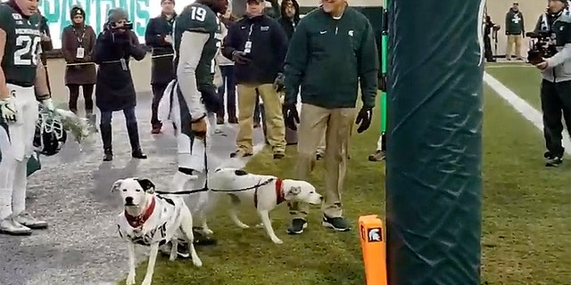 Roxy and Remi accompany cornerback Josh Butler during Senior Day pre-game introductions at Michigan State Saturday night. Butler adopted the dogs after the loss of his parents in an 18-month span.