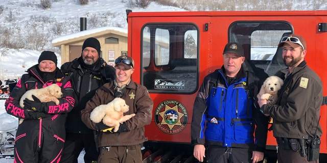 The Weber County Sheriff's Office Search and Rescue team was informed by Utah State Park officials that the pair was asking for help in recovering the stranded animals, which were later identified as three Great Pyrenees puppies.