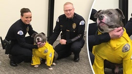 Eddie, a terminally ill dog, becomes honorary K-9 for a day in Washington state