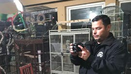 Nearly 200 animals rescued from Texas home, including rabbits, turkeys, exotic birds