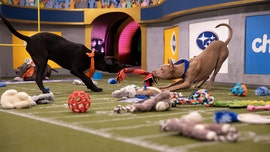 Puppy Bowl 2020: Where to watch and what to know