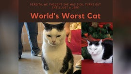 'World's worst cat' receives lots of adoption applications