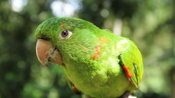 Florida cops investigate after neighbor mistakes parrot for woman screaming for help