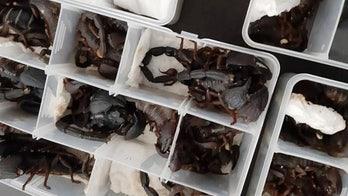 200 venomous scorpions found in passenger's luggage at Sri Lanka airport