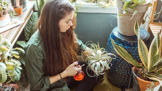 Most millennials are intimidated by plants, survey finds