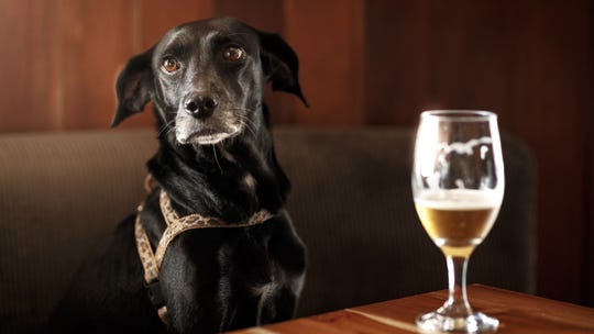 Man attempts to register beer as his emotional support animal