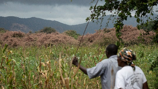 East Africa fears 'triple threat' from coronavirus, floods and locusts