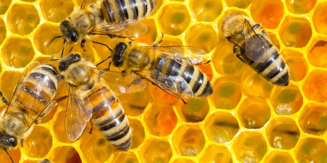 One man was killed and five others were injured after a 100-pound beehive was disturbed in Arizona.