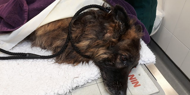 Westlake Legal Group Belgian-Shepherd-2-Notts-Police Drowning dog tied to 'heavy rock' rescued from river in England, woman arrested, police say Travis Fedschun fox-news/world/world-regions/united-kingdom fox-news/world/world-regions/europe fox-news/world/crime fox news fnc/world fnc e9297214-ec11-57fc-b00d-72ec9f4d87bb article