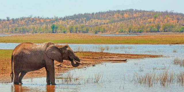 Matusadona National Park is home to a variety of African wildlife, including elephants, lions and hyenas.