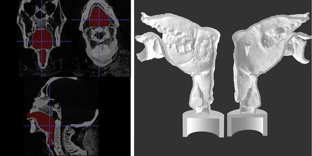 Final segmentation view (left) and sagittal section of the two halves of 3-D printed Nesyamun's vocal tract (rigth). The lack of tongue muscular bulk and soft palate is (Scientific Reports)