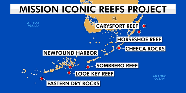 Groups like the National Oceanic and Atmospheric Administration and the Coral Restoration Foundation are teaming up to save these seven iconic reefs up and down the Florida Keys.