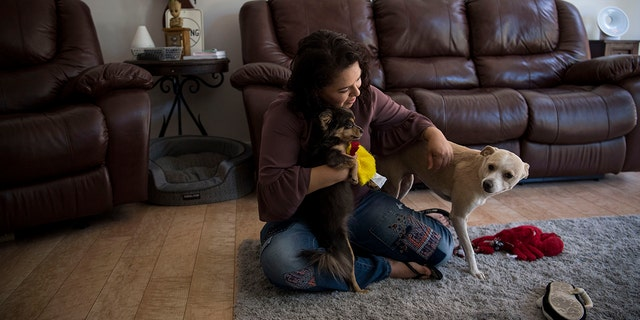 PHOENIX, ARIZONA - JULY 4: Ruby Torres plays with her dogs Angel and Dora in her apartment in Phoenix, Arizona on July 4, 2018. She was given custody of Angel, the larger of the two dogs, during her divorce. She said the dogs have been very comforting for her throughout her cancer treatments, the divorce and the fight over the fate of the embryos. (Photo by Carolyn Van Houten/The Washington Post via Getty Images)