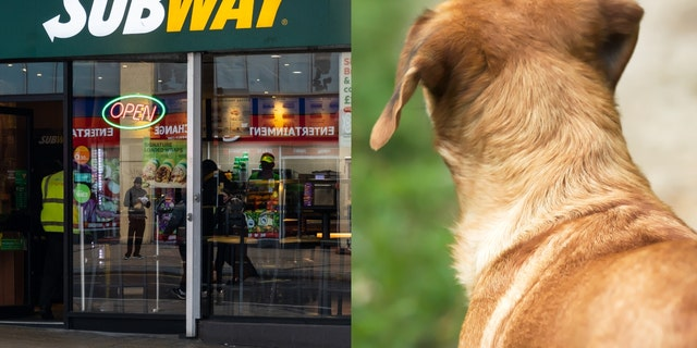 Westlake Legal Group Subway-Sally Stray dog dubbed 'Subway Sally' waits outside store every day for food, video shows Gerren Keith Gaynor fox-news/lifestyle/pets fox-news/lifestyle fox news fnc/food-drink fnc d9bbc391-68dd-5649-b0e4-9b9025cd3296 article