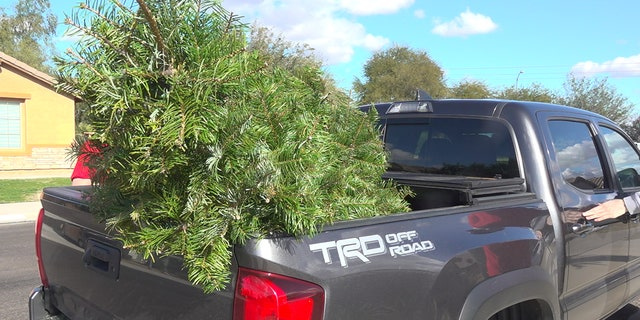 Westlake Legal Group TREE-IN-TRUCK Arizona college students expand Christmas tree removal business Stephanie Bennett fox-news/us/us-regions/southwest/arizona fox-news/lifestyle/occasions/christmas fox news fnc/us fnc b34a5d19-2c11-59a8-886d-9b79ce27d4ec article
