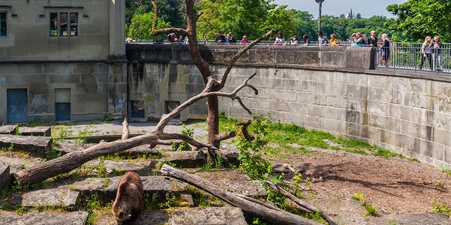 The man apparently failed his citizenship test for not knowing bears and wolves shared an enclosure at his local zoo. (iStock) File
