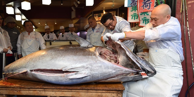 Westlake Legal Group bluefin-tuna2 Japanese 'Tuna King' pays $1.8 million for bluefin tuna at New Year's auction fox-news/great-outdoors/fishing fox-news/food-drink/food/restaurants fox news fnc/food-drink fnc e9a9a360-072f-5e31-ae07-566de31d4ad8 article Alexandra Deabler