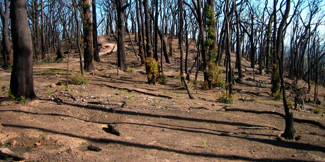Westlake Legal Group climate-change-australia-2 Fires set stage for irreversible forest losses in Australia fox-news/travel/regions/australia fox-news/science/planet-earth/climate fnc/science fnc Associated Press article 2bfe00a9-390d-5d01-abcc-ca95d85a5237