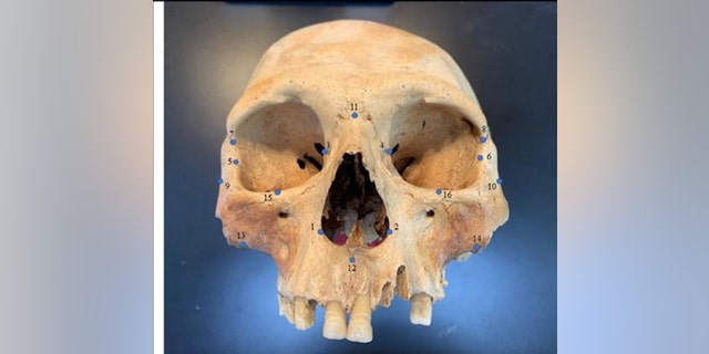 "Researchers analyzed the skulls of early Caribbean inhabitants, using 3D facial ""landmarks"" as a genetic proxy for determining how closely people groups were related to one another. (Credit: Ann Ross/North Carolina State University)"