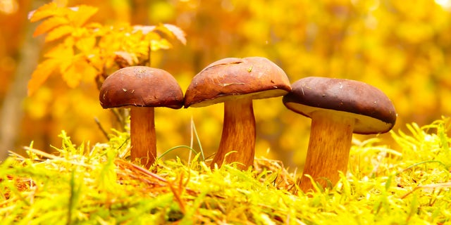 A new paper argues about the potential of living in structures built from fungi.