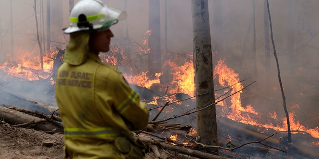 A firefighter keeps an eye on a controlled fire as they work at building a containment line at a wildfire near Bodalla, Australia, Sunday, Jan. 12, 2020.