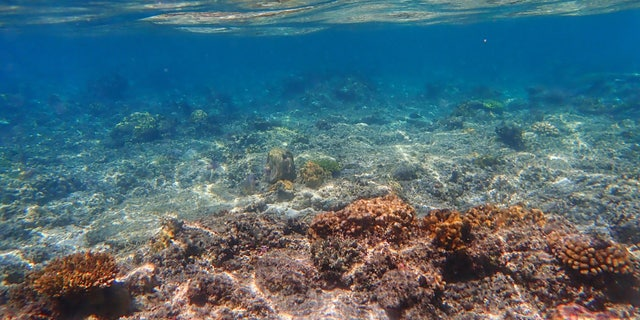 The ocean absorbs most of the excess heat from greenhouse gas emissions, leading to rising ocean temperatures. (Credit: Jiang Zhu)