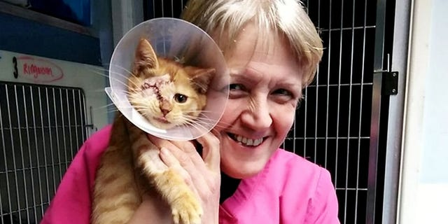 """""""Tango was brought in to us six weeks ago after his litter was attacked by a weasel or fox,"""" explained the shelter's founder Leanne Kent, """"three were sadly killed and Tango arrived with his brother Cash."""""""