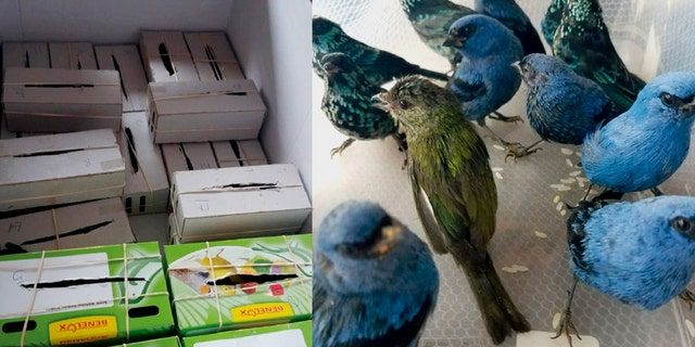 The Peruvian birds were stuffed inside individual cardboard boxes, the National Forest and Wildlife Service (SERFOR) said.